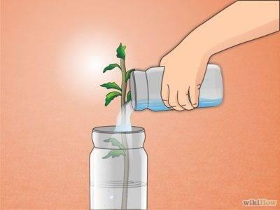 ᐉ как подкислить почву для гортензии лимонной кислотой - godacha.ru