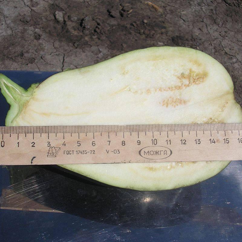Подарок от современных селекционеров — баклажан «фабина f1» с крупными плодами и впечатляющей урожайностью