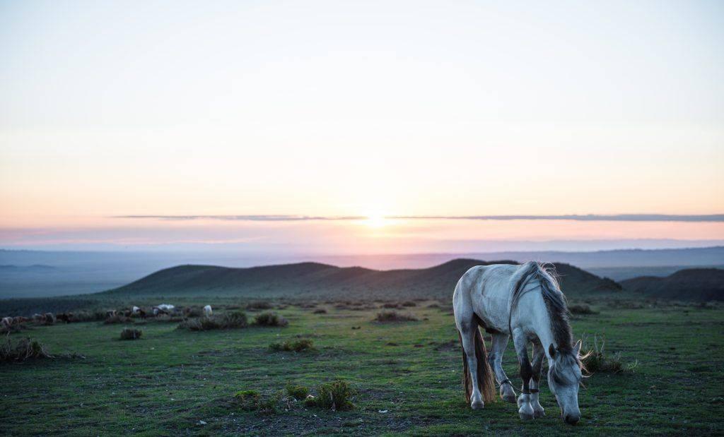 Монгольская порода лошади фото и видео характеристики и описание история - дневник фермера ferma-lux.ru