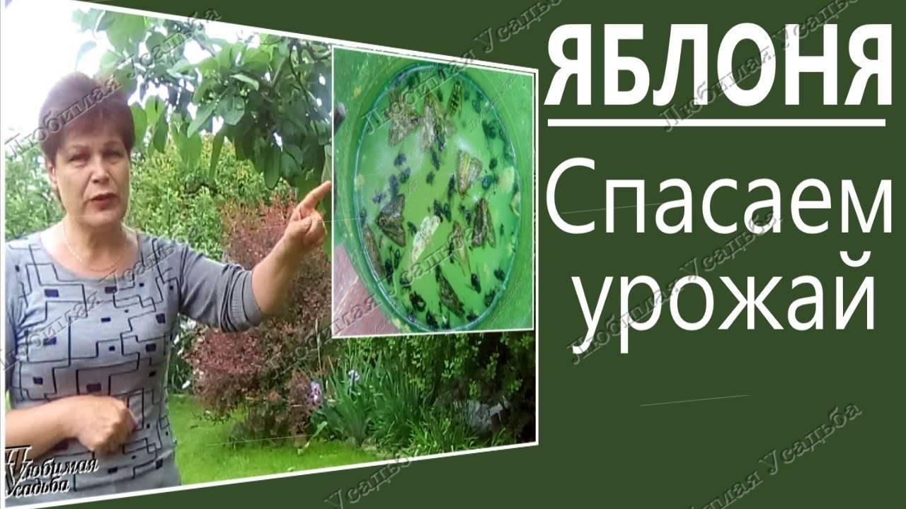 Борьба с яблонным цветоедом: эффективные методы по избавлению от вредителя цветов на яблоне