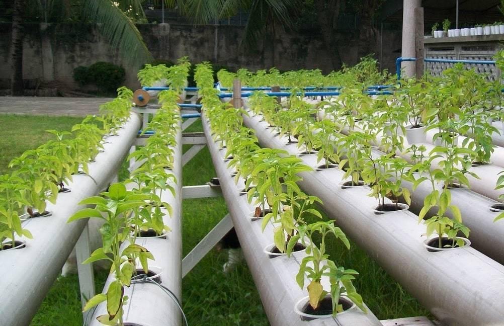 Как сделать гидропонику для выращивания лука на перо? - гидропоника | описание, советы, отзывы, фото и видео