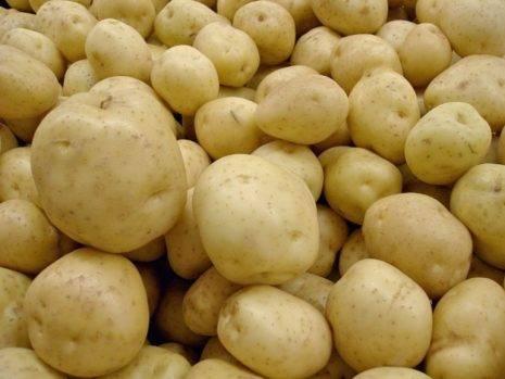 Картофель каратоп: полное описание сорта, выращивание, фото