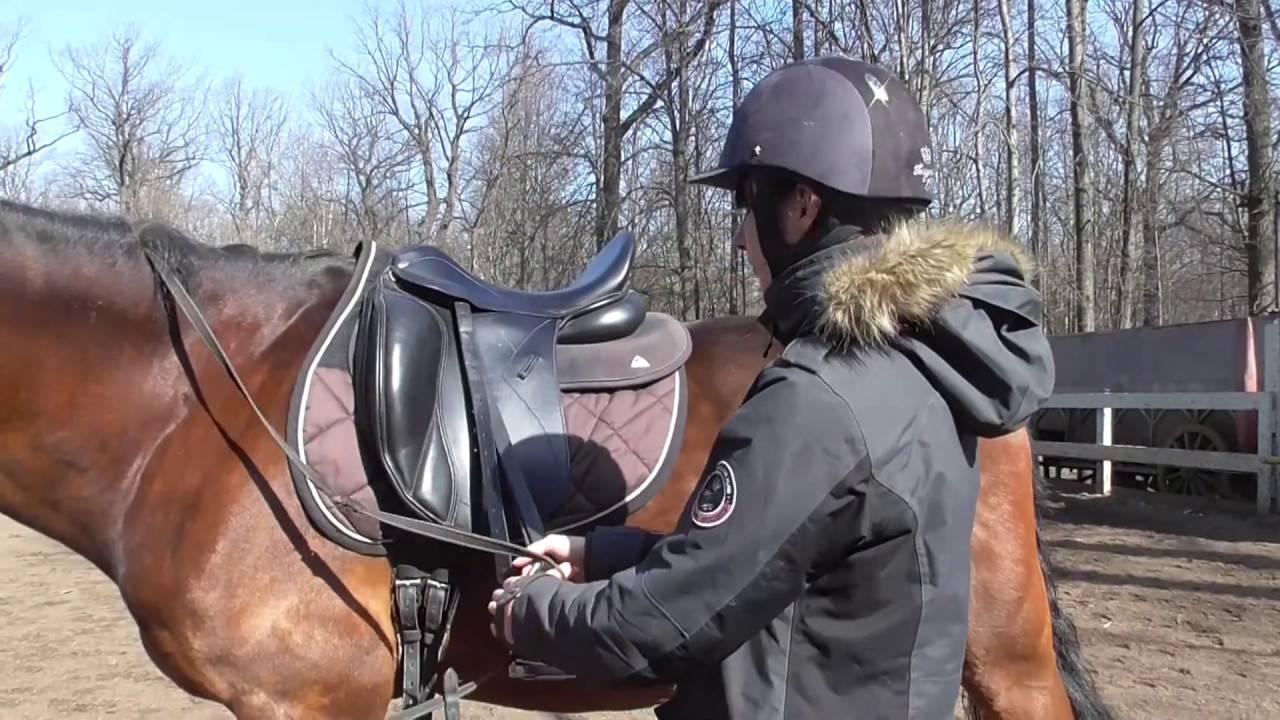 Как правильно ездить на лошади? 2021