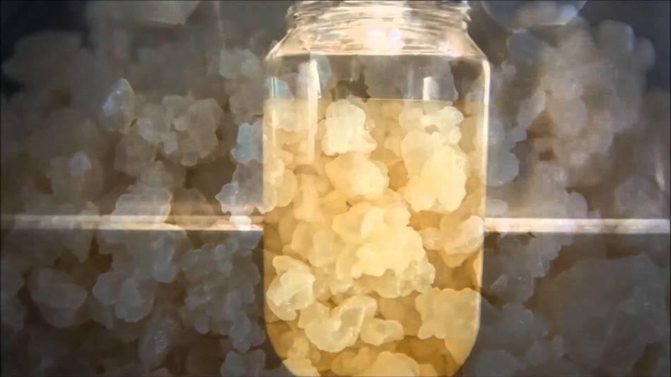 Винный гриб: польза и противопоказания, рецепты шампанского, вина и уксуса + как вырастить в домашних условиях с нуля