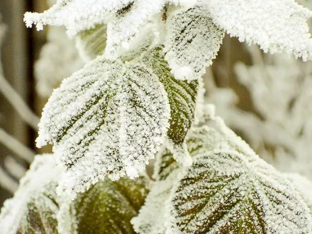 Уход за малиной осенью: подготовка к зиме, подкормка, обрезка, борьба с вредителями и болезнями