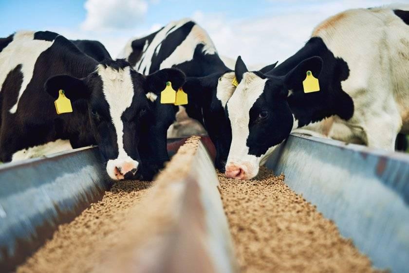 Топ-5 производителей кормовых добавок для крс и инструкция по применению