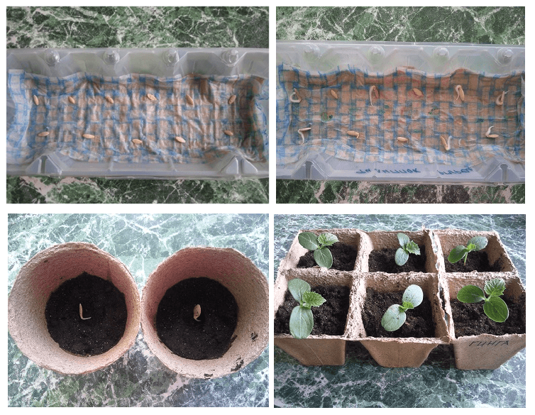 Как приготовить почву для огурцов в теплице весной: какую землю любят огурцы, как ее подготовить и обработать