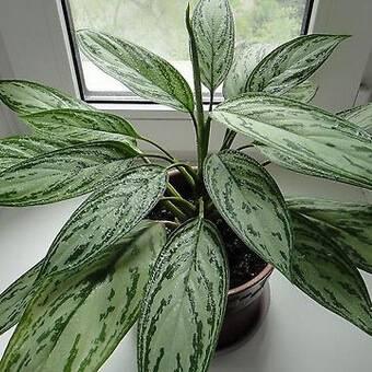Цветущие комнатные растения: 23 вида с фото и названиями