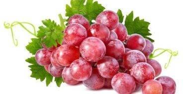 Рошфор: популярный сорт виноградалюбительской селекции