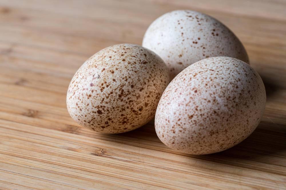 Инкубация индюшиных яиц: режимы, таблицы, сроки выведения