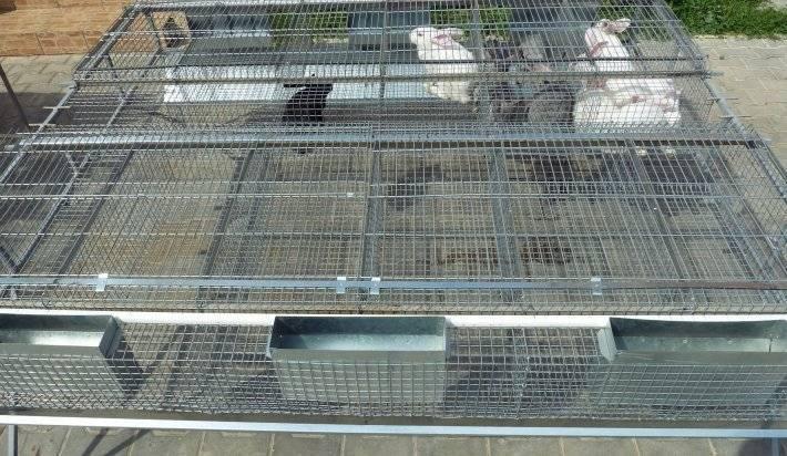 Промышленные клетки для кроликов чертежи с размерами - скороспел
