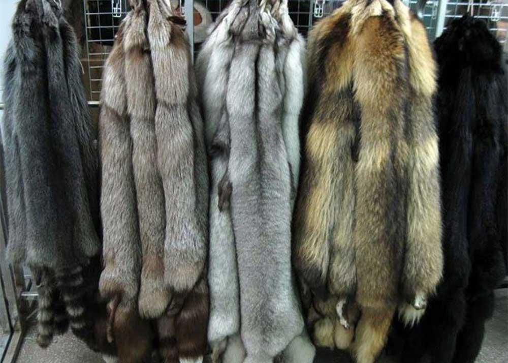 Выделка овечьей шкуры в домашних условиях: описание