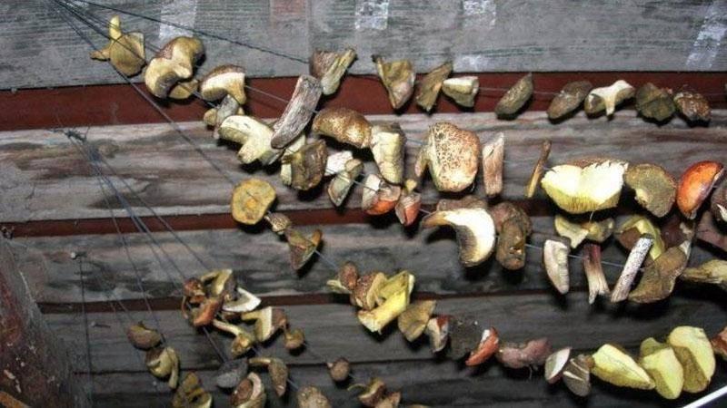 Как правильно сушить белые грибы - современные и старые методы