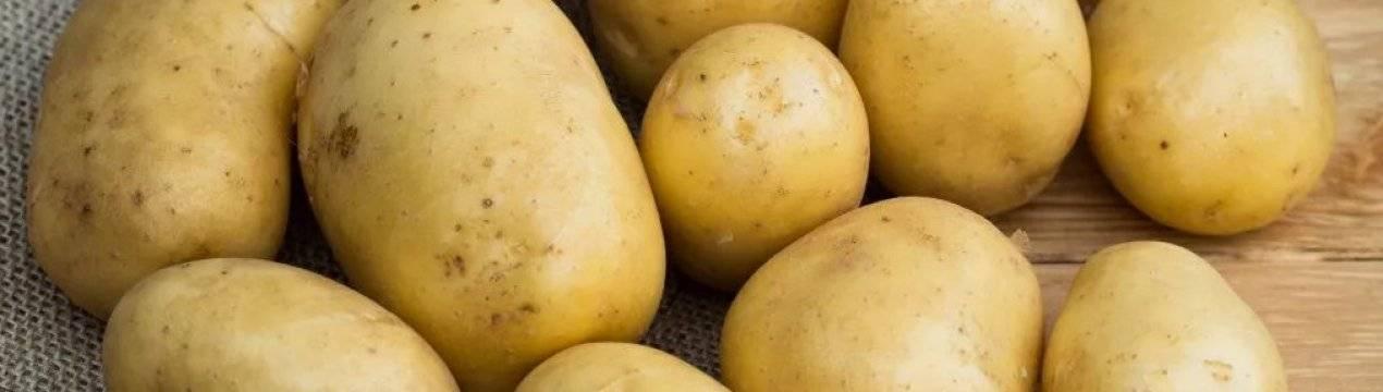 Картофель голубизна: описание и характеристика сорта, фото, отзывы