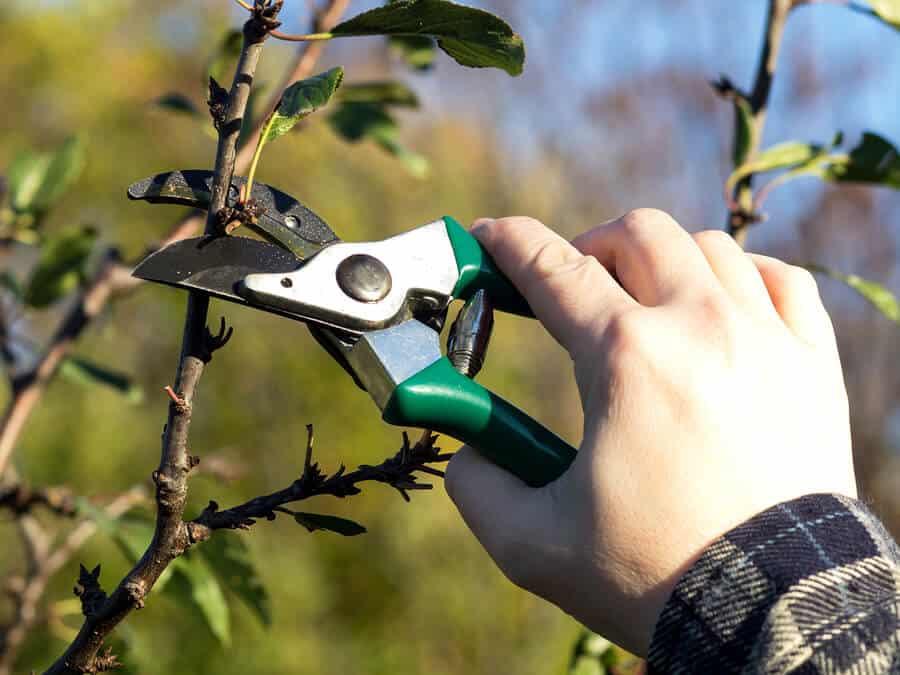 Обрезка вишни осенью - схема для начинающих, правила и пошаговое руководство