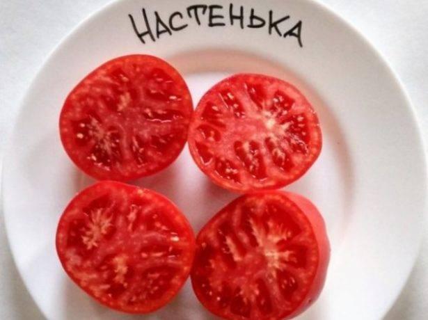 Низкорослый томат настенька: характеристика и отзывы