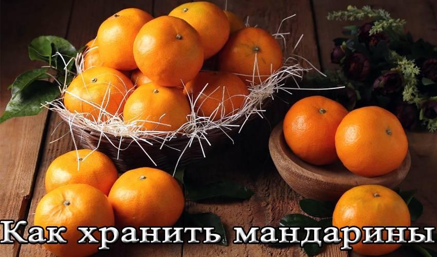 Хранение мандаринов, лимонов и других цитрусовых