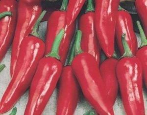Лучшие сорта острого перца для выращивания в средней полосе