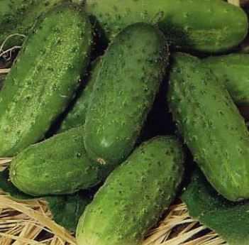 Огурец эстафета f1: описание сорта, фото, отзывы, урожайность