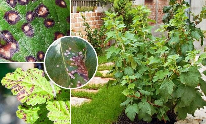 Болезни помидоров с описанием и фото, их лечение
