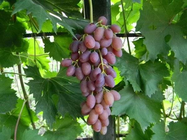История виноделия сша — регионы и особенности