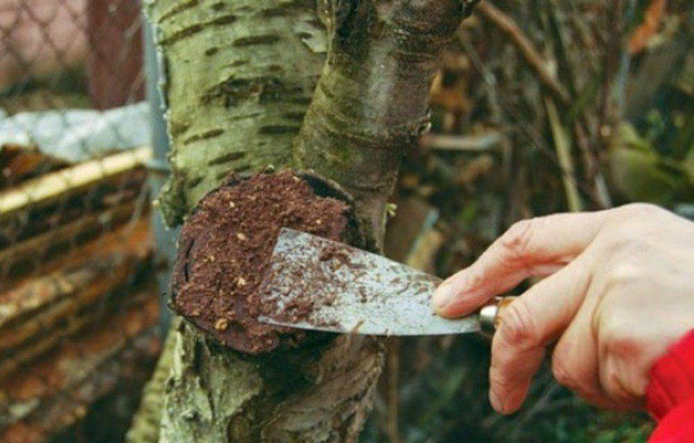 Садовый вар применение. как сделать замазку своими руками в домашних условиях - рецепты