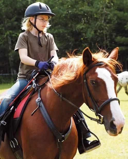 Лошадь скалистых гор — википедия. что такое лошадь скалистых гор