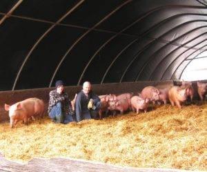 Свинарники (44 фото): сарай для свиней с загоном своими руками. как построить хлев на 2-3 головы поросят со щелевыми полами? другие варианты строительства, чертежи и требования