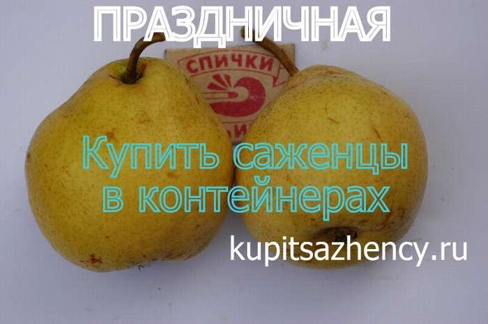 Груша белорусская поздняя: описание сорта, посадка и уход, фото и отзывы