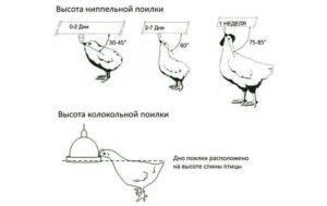 Ниппельные поилки для кур
