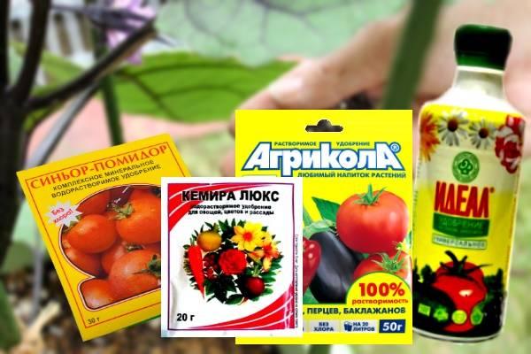 Подкормка баклажанов для большого урожая: чем удобрять, когда подкармливать