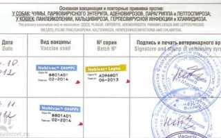 Самые важные вопросы о прививке от covid-19 | милосердие.ru
