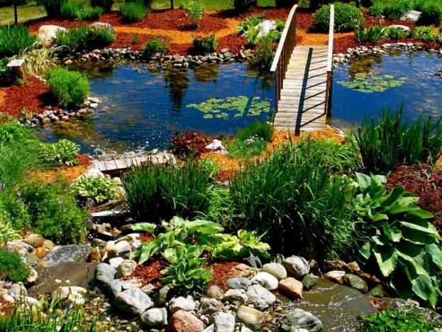 Какие растения лучше всего подходят для пруда на даче