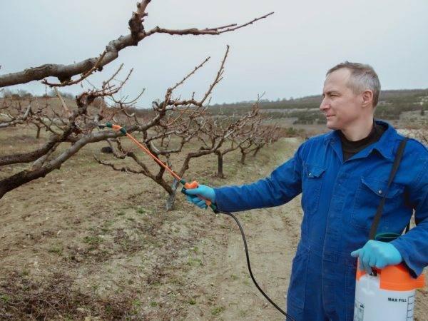 ✅ мочевина (карбамид): особенности удобрения и его применение на огороде, обработка сада мочевиной осенью и весной