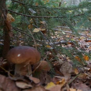 Когда пойдут первые грибы в подмосковье в 2021 году, сроки сбора исходя из сезона и вида грибов, грибные места с маршрутами и направлениями