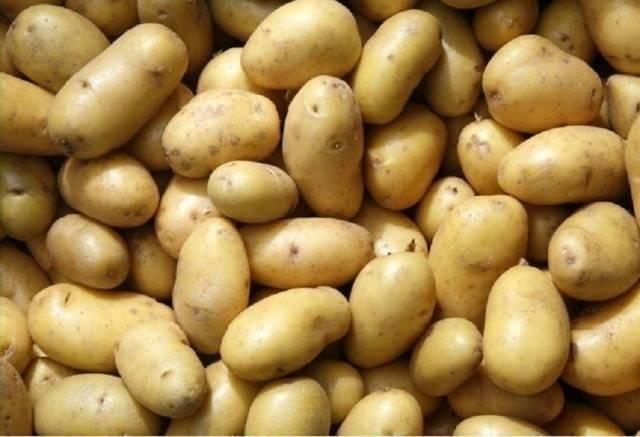 Картофель «колобок»: красивый, вкусный и урожайный