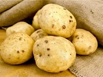 Золотистая картофельная нематода - опасное заболевание картофеля