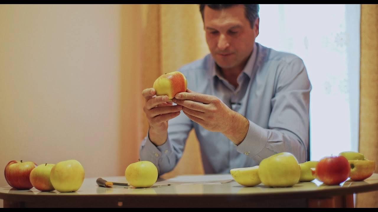 Топ-15 ранних сортов яблонь для вашего сада