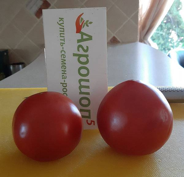 Описание и характеристика нового сорта томатов — «махитос f1»