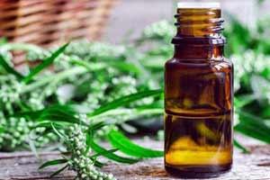 Эфирное масло полыни: полезные свойства и применение