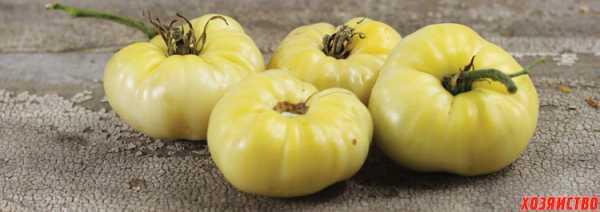 Сорт огурцов «сын полка»: выращивание от посева до сбора урожая