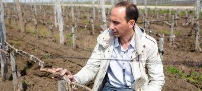 Обрезка винограда осенью для новичков, фото, посадка и уход осенью, подкормка, обработка