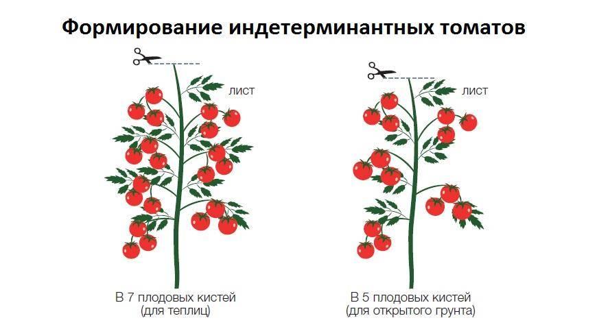 Формирование кустов томатов в теплице: для чего нужна эта процедура при выращивании помидоров, что требуется для ее проведения, какие существуют способы? русский фермер