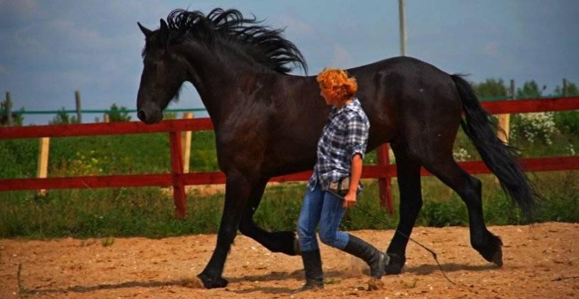 Уроки верховой езды в манеже | конный портал