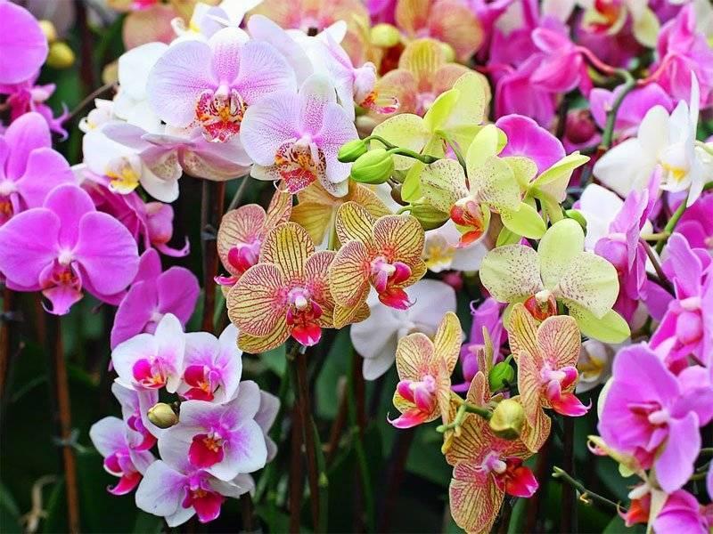 Кора для орхидей: как подготовить самостоятельно