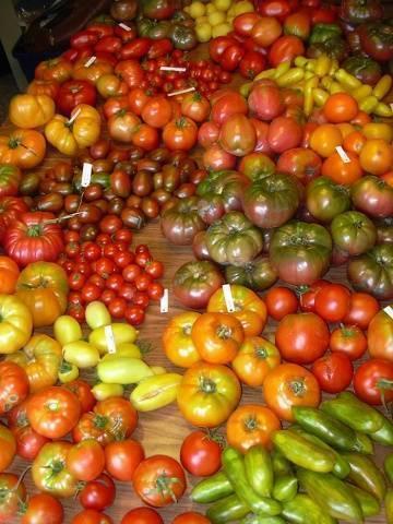 Томат казанова - описание сорта, характеристика, урожайность, отзывы, фото