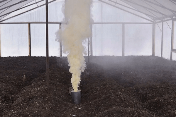 Обработка почвы в теплице весной: как заранее предотвратить возможные напасти