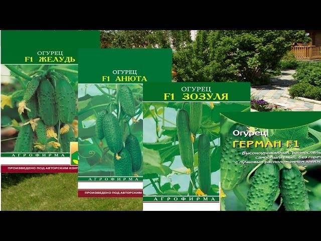 Огурец хрустящий f1: описание сорта и характеристики, фото и отзывы, посадка и уход
