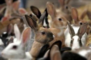 Разведение кроликов как бизнес: этапы открытия фермы, бизнес план, плюсы и минусы