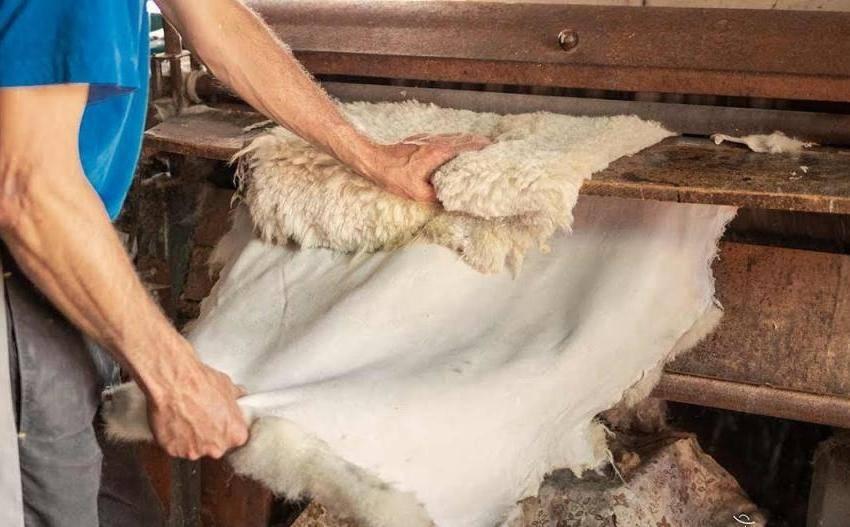 Выделать шкуру овцы в домашних условиях что нужно знать?
